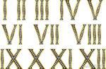 roman-numerals-1-12