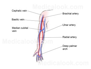 Veins_of_the_Upper_Extremit_large